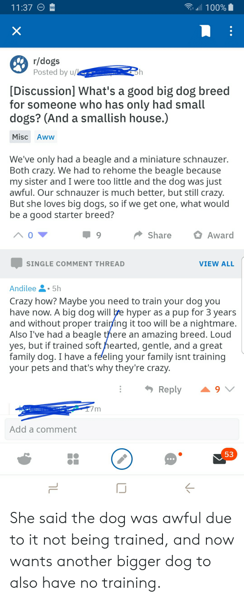 Aww, Crazy, and Dogs: a100%  11:37  100  X  r/dogs  Posted by u/L  [Discussion] What's a good big dog breed  for someone who has only had small  dogs? (And a smallish house.)  Misc Aww  We've only had a beagle and a miniature schnauzer.  Both crazy. We had to rehome the beagle because  my sister and I were too little and the dog was just  awful. Our schnauzer is much better, but still crazy.  But she loves big dogs, so if we get one, what would  be a good starter breed?  Share  Award  SINGLE COMMENT THREAD  VIEW ALL  Andilee  5h  Crazy how? Maybe you need to train your dog you  have now. A big dog will e hyper as a pup for 3 years  and without proper training it too will be a nightmare.  Also I've had a beagle there an amazing breed. Loud  yes, but if trained soft hearted, gentle, and a great  family dog. I have a feeling your family isnt training  your pets and that's why they're crazy.  Reply  Add a comment  53  טך She said the dog was awful due to it not being trained, and now wants another bigger dog to also have no training.
