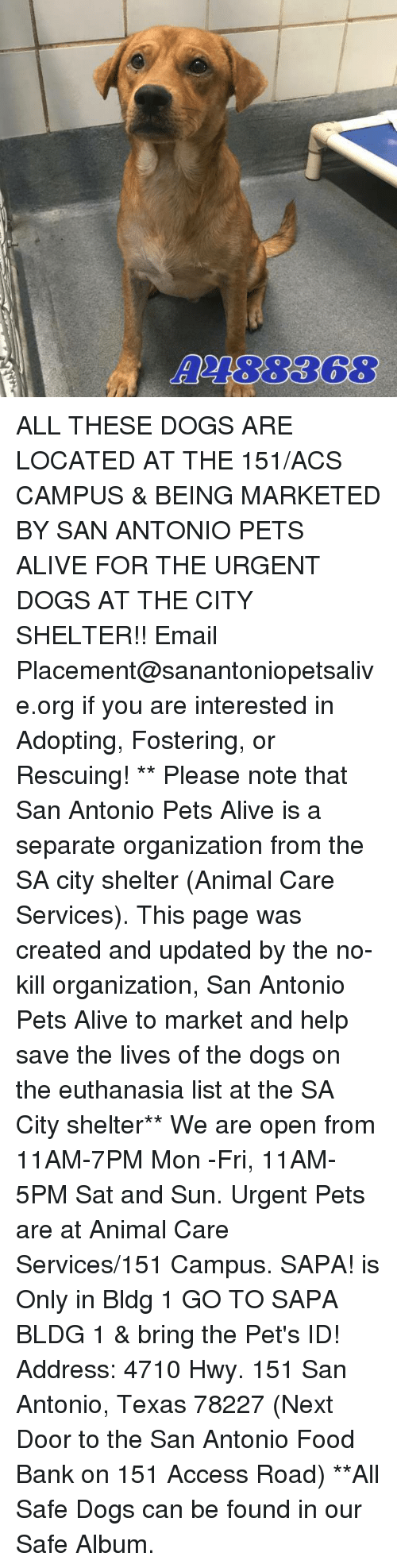 Alive, Dogs, and Food: A2188368 ALL THESE DOGS ARE LOCATED AT THE 151/ACS CAMPUS & BEING MARKETED BY SAN ANTONIO PETS ALIVE FOR THE URGENT DOGS AT THE CITY SHELTER!!  Email Placement@sanantoniopetsalive.org if you are interested in Adopting, Fostering, or Rescuing!                                                                                                                                                                                                                                                                                                                                                             ** Please note that San Antonio Pets Alive is a separate organization from the SA city shelter (Animal Care Services). This page was created and updated by the no-kill organization, San Antonio Pets Alive to market and help save the lives of the dogs on the euthanasia list at the SA City shelter**  We are open from 11AM-7PM Mon -Fri, 11AM-5PM Sat and Sun. Urgent Pets are at Animal Care Services/151 Campus. SAPA! is Only in Bldg 1 GO TO SAPA BLDG 1 & bring the Pet's ID! Address: 4710 Hwy. 151 San Antonio, Texas 78227 (Next Door to the San Antonio Food Bank on 151 Access Road) **All Safe Dogs can be found in our Safe Album.