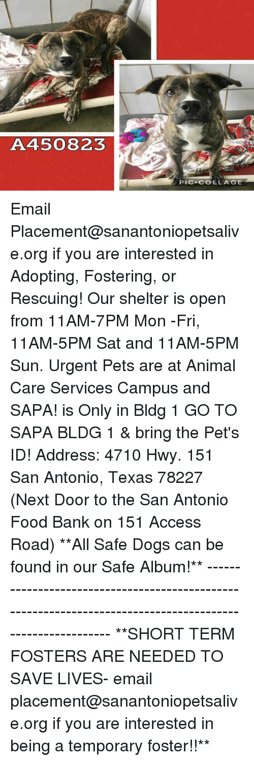 Dogs, Food, and Memes: A450823  PIC.COLLAGE Email Placement@sanantoniopetsalive.org if you are interested in Adopting, Fostering, or Rescuing!  Our shelter is open from 11AM-7PM Mon -Fri, 11AM-5PM Sat and 11AM-5PM Sun.  Urgent Pets are at Animal Care Services Campus and SAPA! is Only in Bldg 1 GO TO SAPA BLDG 1 & bring the Pet's ID! Address: 4710 Hwy. 151 San Antonio, Texas 78227 (Next Door to the San Antonio Food Bank on 151 Access Road)  **All Safe Dogs can be found in our Safe Album!** ---------------------------------------------------------------------------------------------------------- **SHORT TERM FOSTERS ARE NEEDED TO SAVE LIVES- email placement@sanantoniopetsalive.org if you are interested in being a temporary foster!!**