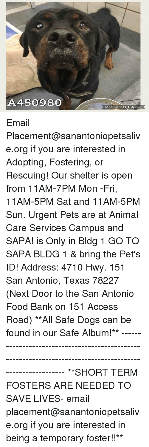 Dogs, Food, and Memes: A450980  PIC-COLLAGE Email Placement@sanantoniopetsalive.org if you are interested in Adopting, Fostering, or Rescuing!  Our shelter is open from 11AM-7PM Mon -Fri, 11AM-5PM Sat and 11AM-5PM Sun.  Urgent Pets are at Animal Care Services Campus and SAPA! is Only in Bldg 1 GO TO SAPA BLDG 1 & bring the Pet's ID! Address: 4710 Hwy. 151 San Antonio, Texas 78227 (Next Door to the San Antonio Food Bank on 151 Access Road)  **All Safe Dogs can be found in our Safe Album!** ---------------------------------------------------------------------------------------------------------- **SHORT TERM FOSTERS ARE NEEDED TO SAVE LIVES- email placement@sanantoniopetsalive.org if you are interested in being a temporary foster!!**