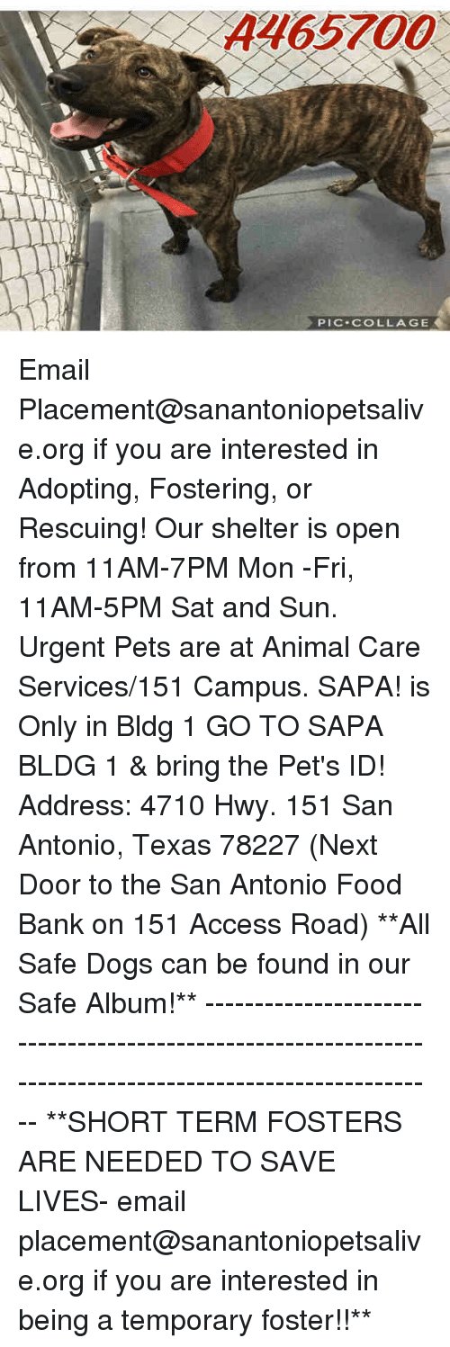 Dogs, Food, and Memes: A465700  PIC COLLAGE Email Placement@sanantoniopetsalive.org if you are interested in Adopting, Fostering, or Rescuing!  Our shelter is open from 11AM-7PM Mon -Fri, 11AM-5PM Sat and Sun.  Urgent Pets are at Animal Care Services/151 Campus. SAPA! is Only in Bldg 1 GO TO SAPA BLDG 1 & bring the Pet's ID! Address: 4710 Hwy. 151 San Antonio, Texas 78227 (Next Door to the San Antonio Food Bank on 151 Access Road)  **All Safe Dogs can be found in our Safe Album!** ---------------------------------------------------------------------------------------------------------- **SHORT TERM FOSTERS ARE NEEDED TO SAVE LIVES- email placement@sanantoniopetsalive.org if you are interested in being a temporary foster!!**