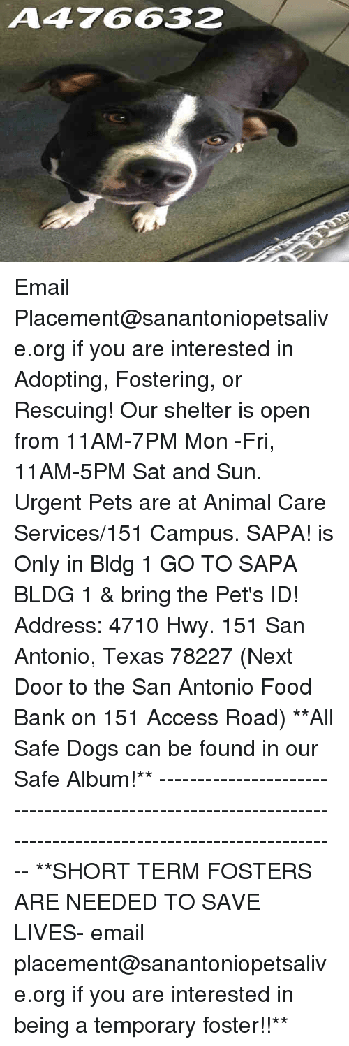Dogs, Food, and Memes: A476632 Email Placement@sanantoniopetsalive.org if you are interested in Adopting, Fostering, or Rescuing!  Our shelter is open from 11AM-7PM Mon -Fri, 11AM-5PM Sat and Sun.  Urgent Pets are at Animal Care Services/151 Campus. SAPA! is Only in Bldg 1 GO TO SAPA BLDG 1 & bring the Pet's ID! Address: 4710 Hwy. 151 San Antonio, Texas 78227 (Next Door to the San Antonio Food Bank on 151 Access Road)  **All Safe Dogs can be found in our Safe Album!** ---------------------------------------------------------------------------------------------------------- **SHORT TERM FOSTERS ARE NEEDED TO SAVE LIVES- email placement@sanantoniopetsalive.org if you are interested in being a temporary foster!!**