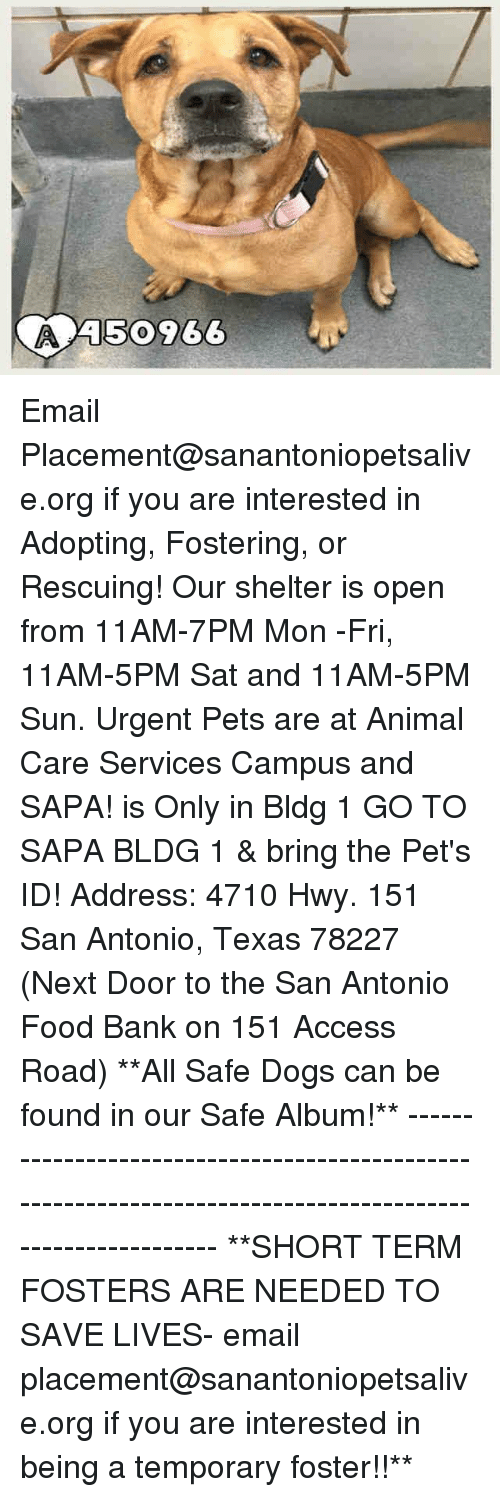 Dogs, Food, and Memes: A50966 Email Placement@sanantoniopetsalive.org if you are interested in Adopting, Fostering, or Rescuing!  Our shelter is open from 11AM-7PM Mon -Fri, 11AM-5PM Sat and 11AM-5PM Sun.  Urgent Pets are at Animal Care Services Campus and SAPA! is Only in Bldg 1 GO TO SAPA BLDG 1 & bring the Pet's ID! Address: 4710 Hwy. 151 San Antonio, Texas 78227 (Next Door to the San Antonio Food Bank on 151 Access Road)  **All Safe Dogs can be found in our Safe Album!** ---------------------------------------------------------------------------------------------------------- **SHORT TERM FOSTERS ARE NEEDED TO SAVE LIVES- email placement@sanantoniopetsalive.org if you are interested in being a temporary foster!!**