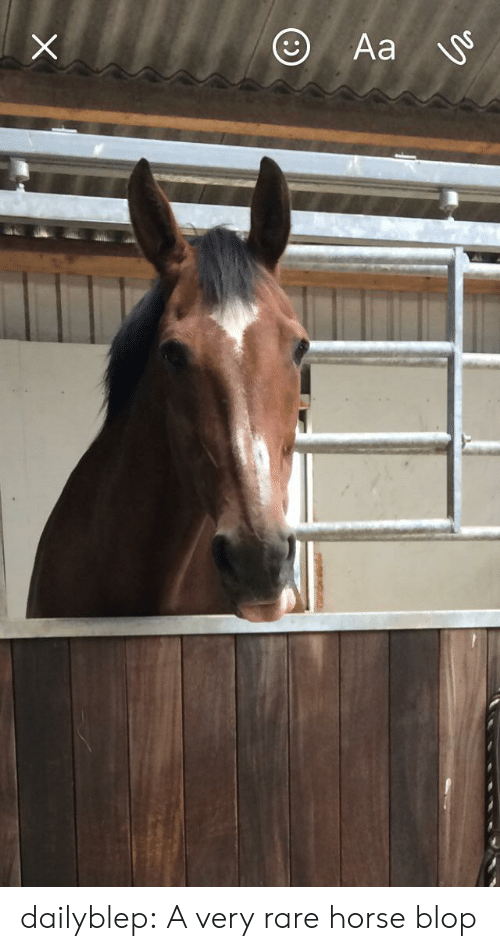 Tumblr, Blog, and Horse: Aa  CO dailyblep:  A very rare horse blop