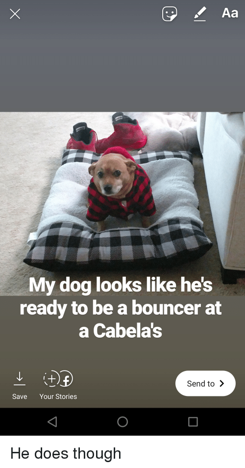 Aa My Dog Looks Like Hes Ready to Be a Bouncer at a Cabelas Send to