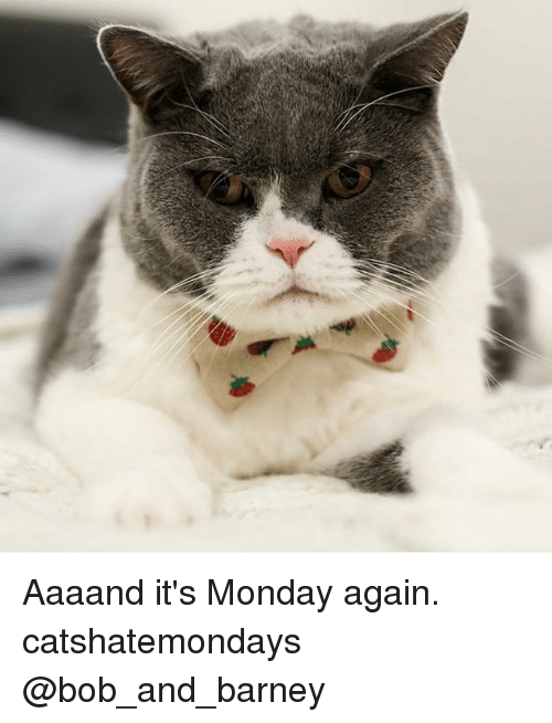 Barney, Memes, and Monday: Aaaand it's Monday again. catshatemondays @bob_and_barney