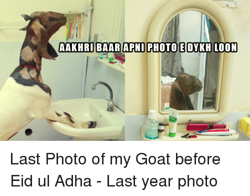 Funny Goat And Adha Aakhribaar Apni Photo Dykh Loon Last Photo Of My