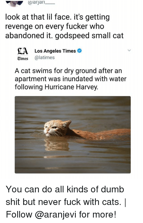 Cats, Dumb, and Memes: aarjan_  look at that lil face. it's getting  revenge on every fucker who  abandoned it. godspeed small cat  A Los Angeles Timeso  Cimes @latimes  A cat swims for dry ground after an  apartment was inundated with water  following Hurricane Harvey. You can do all kinds of dumb shit but never fuck with cats. | Follow @aranjevi for more!