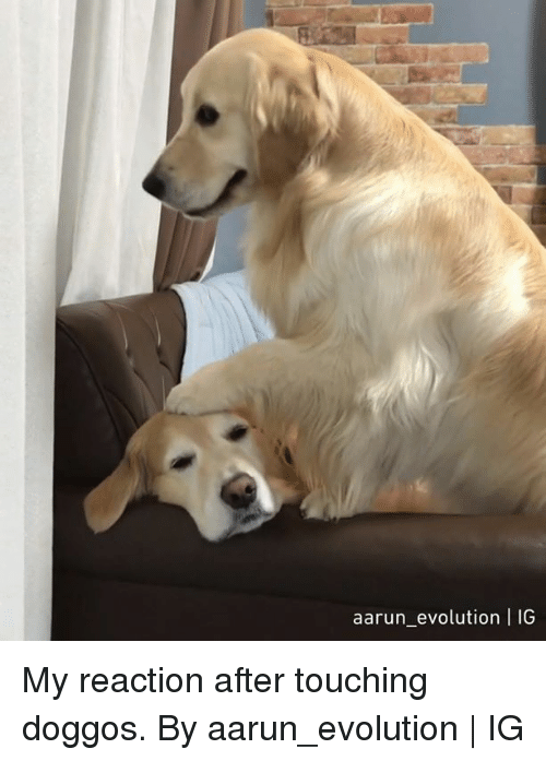 Dank, Evolution, and 🤖: aarun_ evolution | IG My reaction after touching doggos.  By aarun_evolution | IG