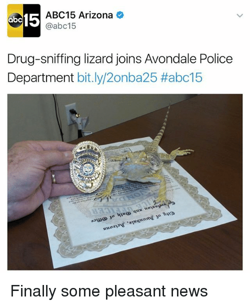 Funny, News, and Police: ab  15  ABC15 Arizona  @abc15  Drug-sniffing lizard joins Avondale Police  Department  bit.ly/2onba25 Habc15 Finally some pleasant news