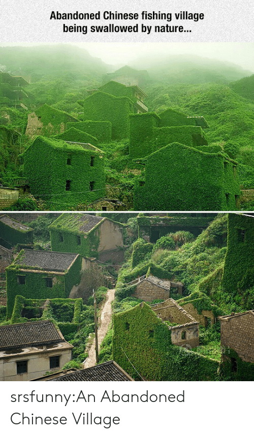 Tumblr, Blog, and Chinese: Abandoned Chinese fishing village  being swallowed by nature... srsfunny:An Abandoned Chinese Village