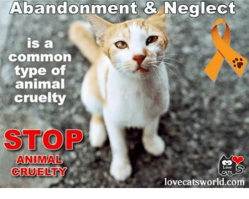 Abandonment & Neglect Is a Commmmon Type of Animal Cruelty