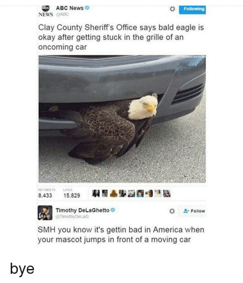 abc news following news abc clay county sheriffs office says 6214979 search bald eagle memes on me me