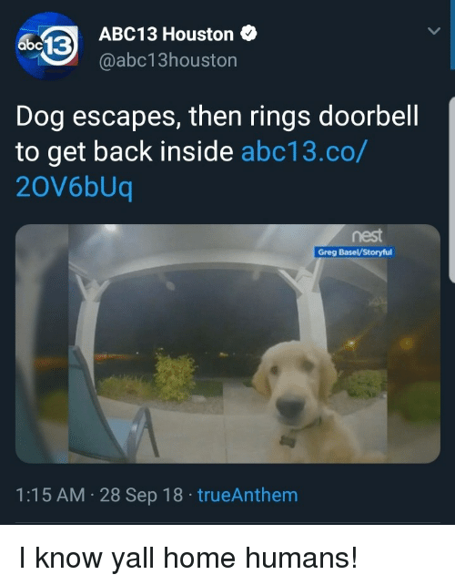 Abc13, Home, and Houston: ABC13 Houston  @abc13houston  abc13  Dog escapes, then rings doorbell  to get back inside abc13.co/  20V6bUq  nest  Greg BaselV/Storyful  1:15 AM 28 Sep 18 trueAnthem I know yall home humans!