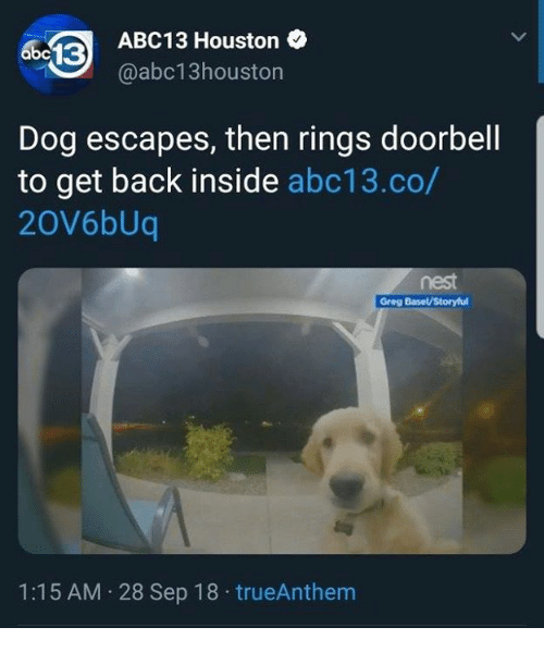 Dank, Abc13, and Houston: ABC13 Houston  @abc13houston  Dog escapes, then rings doorbell  to get back inside abc13.co/  20V6bUq  nest  Greg Basel/Storyful  1:15 AM 28 Sep 18 trueAnthem