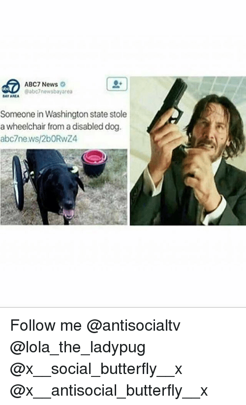 Memes, News, and Abc7: ABC7 News  abc7newsbayarea  BAY AREA  Someone in Washington state stole  a wheelchair from a disabled dog  abc7news/2bORwZ Follow me @antisocialtv @lola_the_ladypug @x__social_butterfly__x @x__antisocial_butterfly__x
