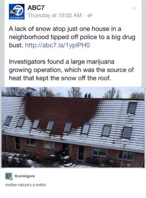 Drugs, Police, and Snitch: ABC7  Thursday at 10:00 AM  A lack of snow atop just one house in a  neighborhood tipped off police to a big drug  bust. http://abc7.la/lyplPHO  Investigators found a large marijuana  growing operation, which was the source of  heat that kept the snow off the roof.  Itcol-kilgore  mother nature's a snitch