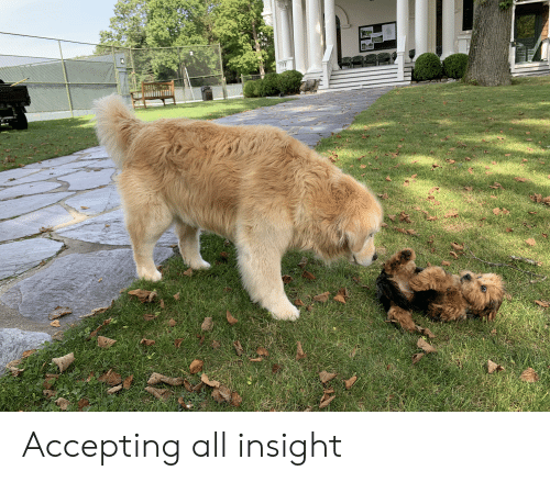 Insight, All, and Accepting: Accepting all insight