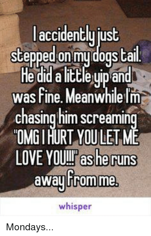 Memes, Chase, and 🤖: accidently  stepped on my dogs tail  Heddalittleuip and  was fine. Meanwhile Im  chasing him screamin  OMGIHURT YOULETME  LOVE YOUIT as he runs  away Fromme,  whisper Mondays...