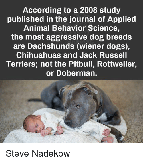 Aggressive Dog Breed Owners Are More Hostile Than Other ...