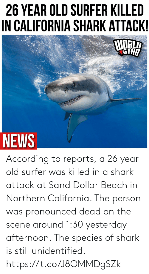 Shark, Beach, and California: According to reports, a 26 year old surfer was killed in a shark attack at Sand Dollar Beach in Northern California. The person was pronounced dead on the scene around 1:30 yesterday afternoon. The species of shark is still unidentified. https://t.co/J8OMMDgSZk