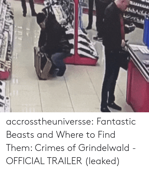 Target, Tumblr, and Blog: accrosstheuniversse:  Fantastic Beasts and Where to Find Them: Crimes of Grindelwald - OFFICIAL TRAILER (leaked)