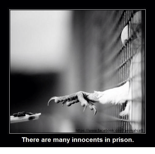 Aceboo Alsa There Are Many Innocents in Prison | Meme on ME ME