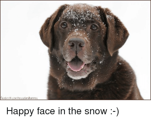 Memes, 🤖, and Happy Face: acebook.com/resselandhannes Happy face in the snow :-)