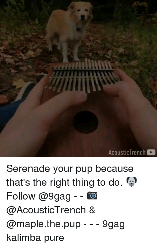 9gag, Memes, and Pup: AcousticTrench Serenade your pup because that's the right thing to do. 🐶 Follow @9gag - - 📷 @AcousticTrench & @maple.the.pup - - - 9gag kalimba pure