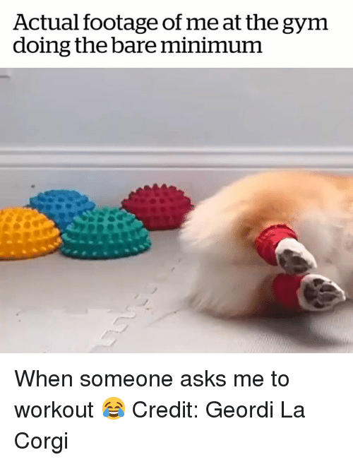 Corgi, Gym, and Asks: Actual footage of me at the gym  doing the bare minimum When someone asks me to workout 😂  Credit: Geordi La Corgi