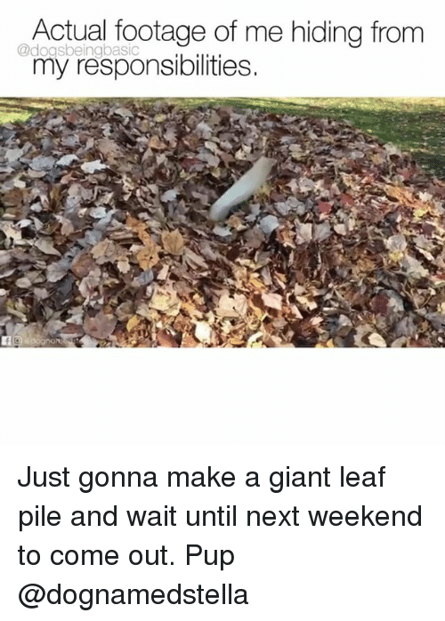 Memes, Giant, and Pup: Actual footage of me hiding from  my responsibilities.  @dogsbeingbasic Just gonna make a giant leaf pile and wait until next weekend to come out. Pup @dognamedstella