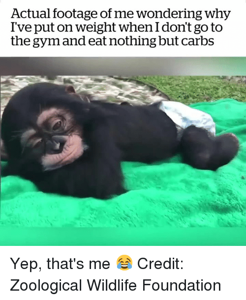Gym, Foundation, and Why: Actual footage of me wondering why  I've put on weight when I don't go to  the gym and eat nothing but carbs Yep, that's me 😂  Credit: Zoological Wildlife Foundation