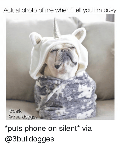 Memes, Phone, and 🤖: Actual photo of me when i tell you iim busy  @bark  @3bulldogges *puts phone on silent* via @3bulldogges
