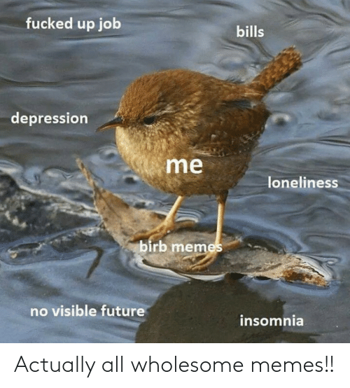 Memes, Wholesome, and All: Actually all wholesome memes!!