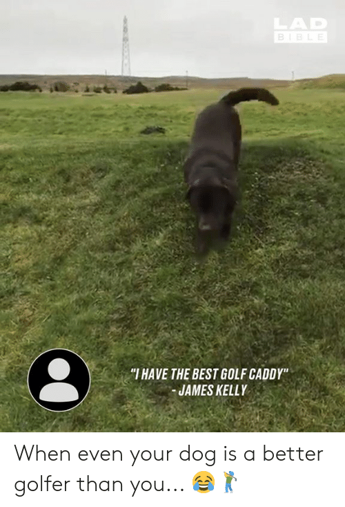 "Dank, Best, and Bible: AD  BIBLE  ""I HAVE THE BEST GOLF CADDY""  JAMES KELLY When even your dog is a better golfer than you... 😂🏌️‍♂️"