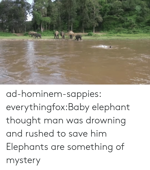 Tumblr, Blog, and Elephant: ad-hominem-sappies:  everythingfox:Baby elephant thought man was drowning and rushed to save him  Elephants are something of mystery