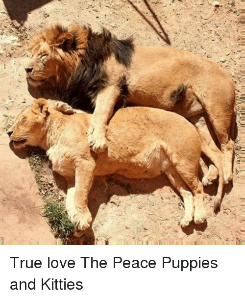 Ad True Love The Peace Puppies And Kitties Kitties Meme On Meme