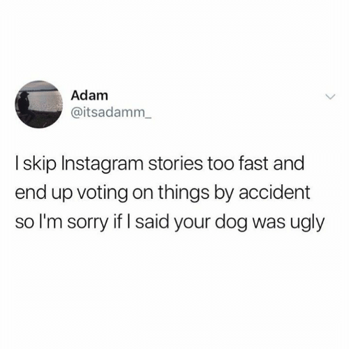 Instagram, Sorry, and Ugly: Adam  @itsadamm  I skip Instagram stories too fast and  end up voting on things by accident  so I'm sorry if I said your dog was ugly