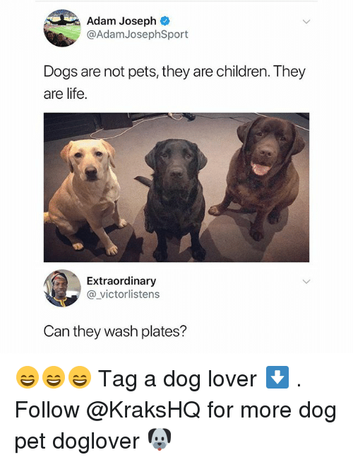 Children, Dogs, and Life: Adam Joseph  @AdamJosephSport  Dogs are not pets, they are children. They  are life.  Extraordinary  @victorlistens  Can they wash plates? 😄😄😄 Tag a dog lover ⬇️ . Follow @KraksHQ for more dog pet doglover 🐶