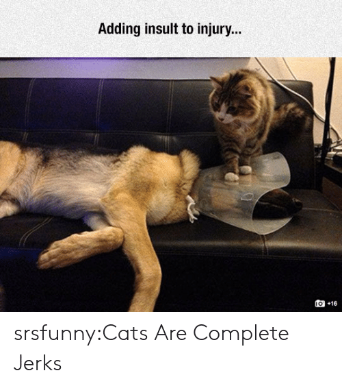 Cats, Tumblr, and Blog: Adding insult to injury..  o +16 srsfunny:Cats Are Complete Jerks