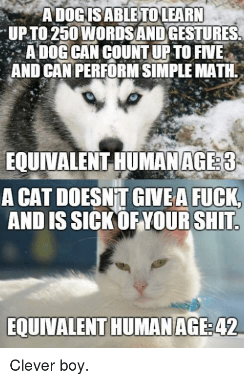 Funny, Shit, and Fuck: ADOGISABLETOLEARN  UPTO 250 WORDSANDGESTURES  A DOG CAN COUNT UP TO FIVE  AND CAN PERFORM SIMPLE MATH.  EQUINALENT HUNANAG33  A CAT DOESNT GIVEA FUCK  AND IS SICK OF YOUR SHIT  EQUIVALENT HUMANAGE:42 Clever boy.