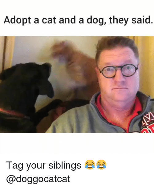 Memes, 🤖, and Dog: Adopt a cat and a dog, they said Tag your siblings 😂😂 @doggocatcat