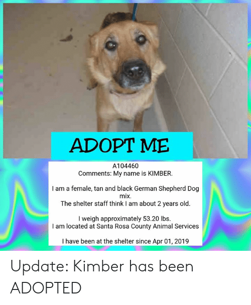 Adopt Me A104460 Comments My Name Is Kimber I Am A Female Tan And Black German Shepherd Dog Mix The Shelter Staff Think I Am About 2 Years Old I Weigh Approximately