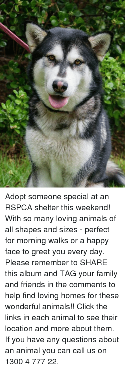 Adopt Someone Special at an RSPCA Shelter This Weekend! With