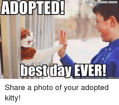 adopted cataddictsanony mouse best day www facebook com cat addicts share a photo of 8701667 ✅ 25 best memes about youre adopted youre adopted memes