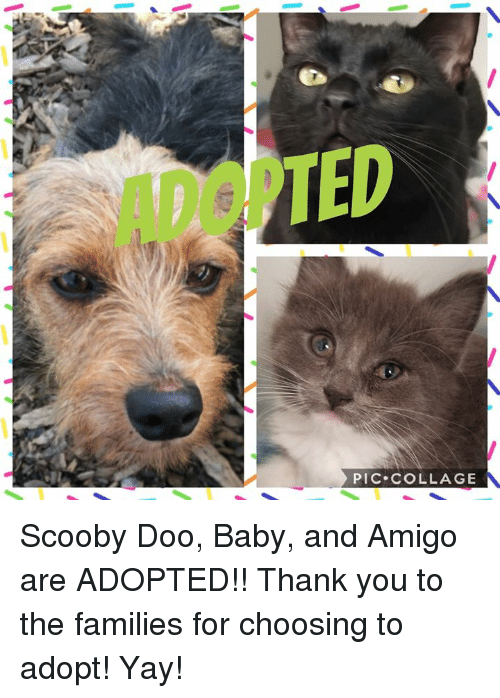 Memes, Scooby Doo, and Thank You: ADOPTED  PIC COLLAGE Scooby Doo, Baby, and Amigo are ADOPTED!! Thank you to the families for choosing to adopt! Yay!