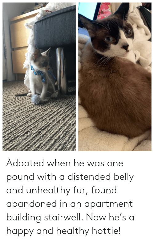 Happy, Pound, and One: Adopted when he was one pound with a distended belly and unhealthy fur, found abandoned in an apartment building stairwell. Now he's a happy and healthy hottie!