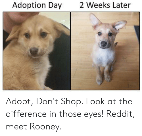 Adoption Day 2 Weeks Later Adopt Don't Shop Look at the