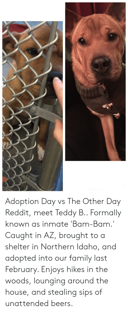 Adoption Day vs the Other Day Reddit Meet Teddy B Formally Known as