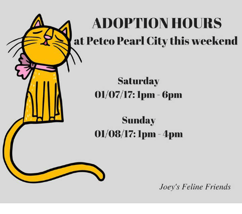 ADOPTION HOURS at Petco Pearl City This Weekend Saturday 0107171pm